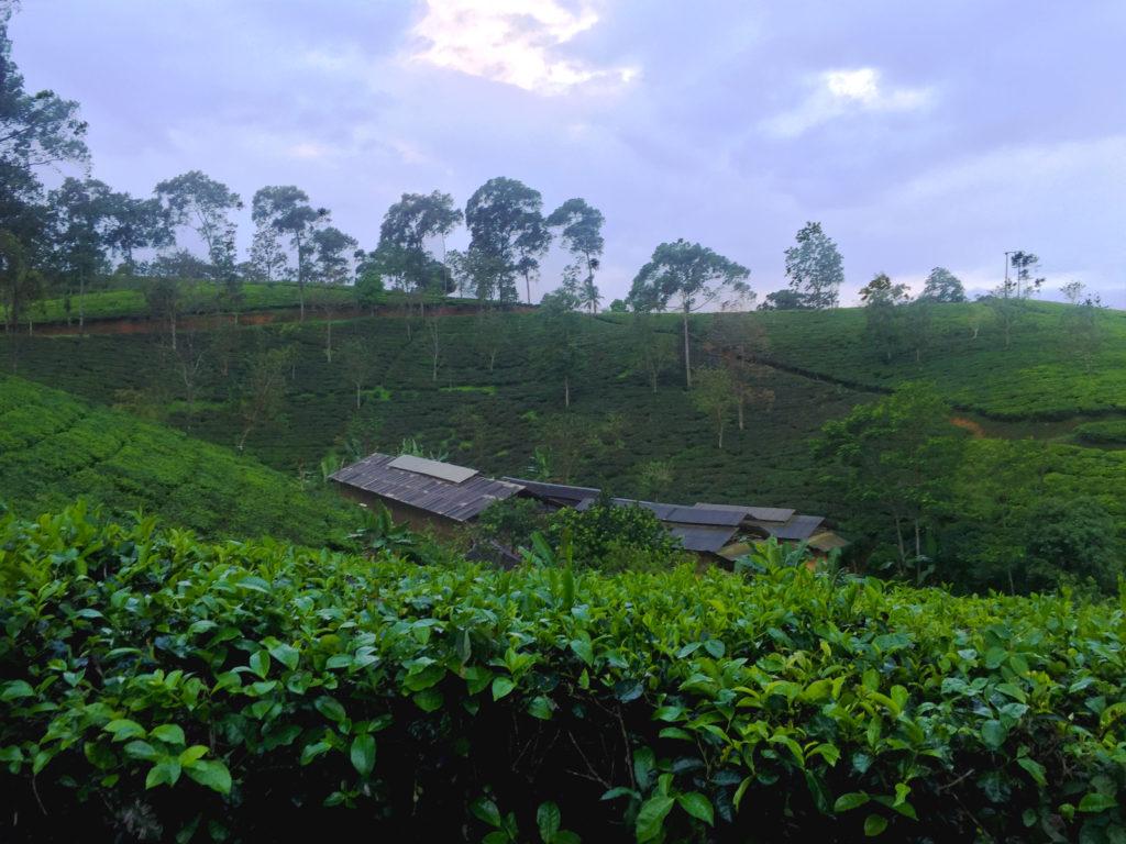 landscape_teh